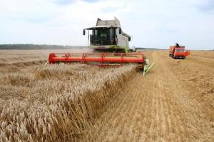 Залог успеха - крупные агрохозяйства и самоотверженный труд