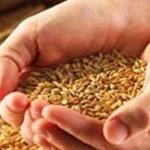 Зерно массово скупают за наличную валюту и продают оффшорным компаниям
