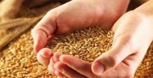 Одесская таможня выявила противоправную сделку с зерном