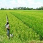 В Килийском районе согласовали цену воды для орошения рисовых полей