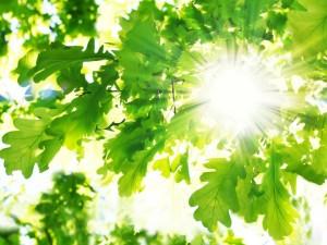 Солнечные батареи для Измаила