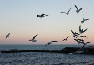 Птица другого полета