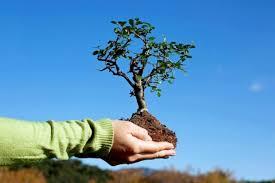 Посади дерево миру