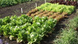 Социальная помощь одесским огородникам: цивилизованные условия для реализации