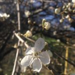 Одесса цветет и пахнет: как уберечь себя от сезонной аллергии