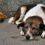 В одної з сільських рад Біляївського району жителів просять забезпечити безпеку людей і тварин